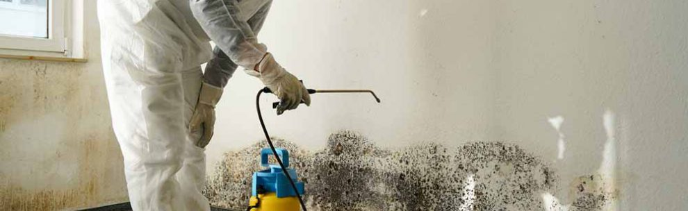 Mold-Related Services